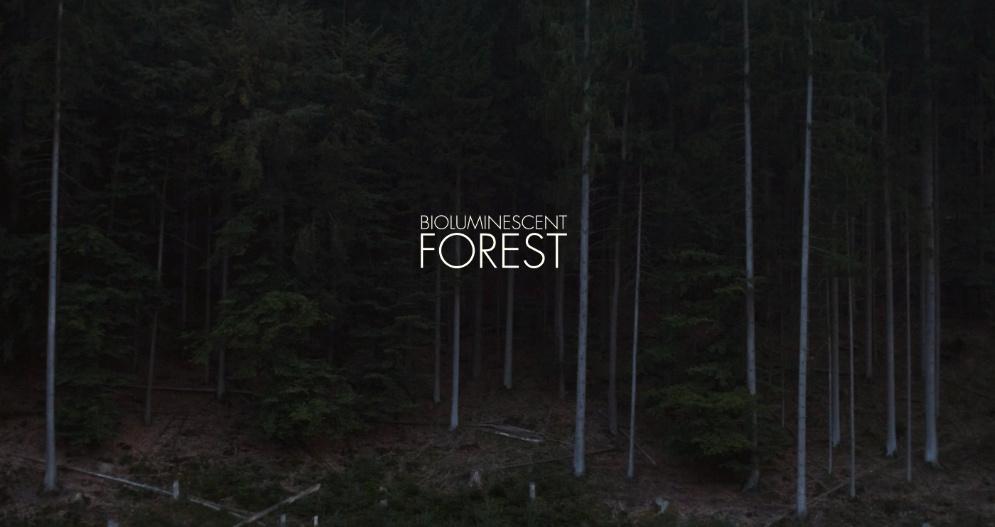 El Bosque Bioluminiscente
