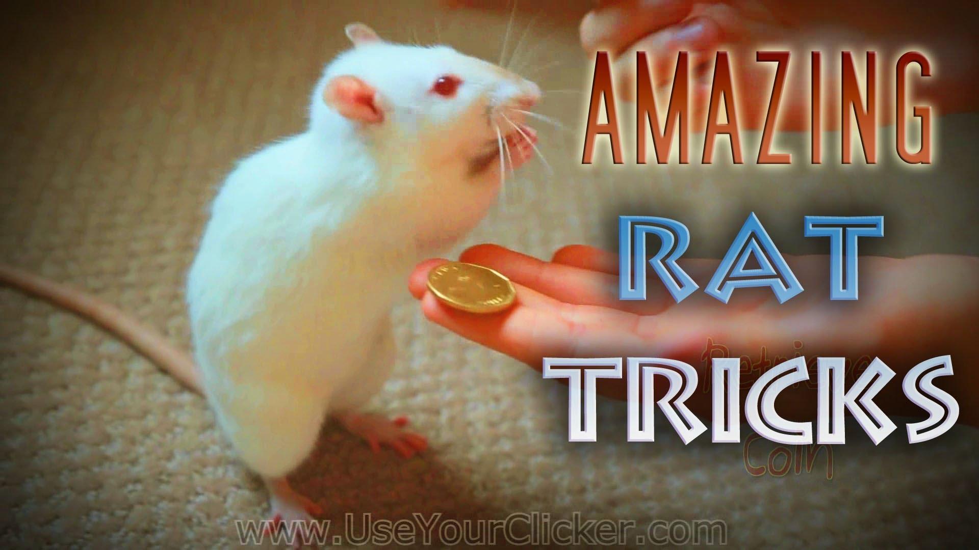 Truco o Rata?